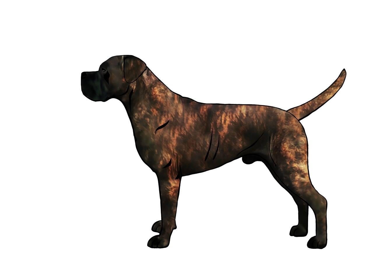 Black Dog Colorado